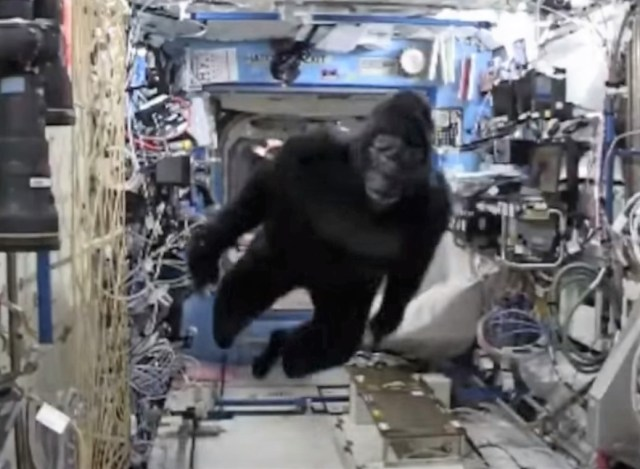 Image: Gorilla in space