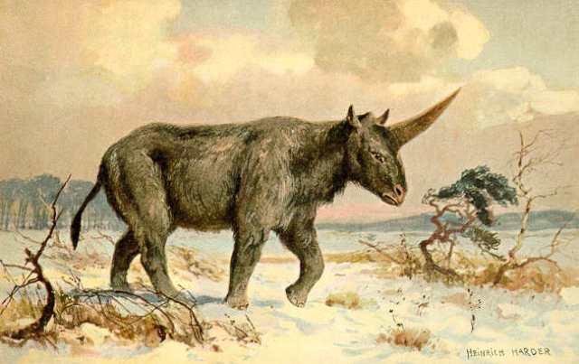 Image: Elasmotherium
