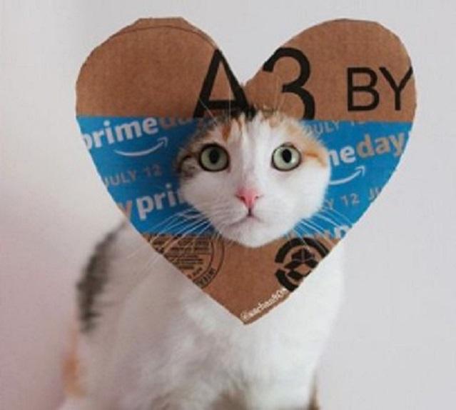 Image: Amazon Prime cat