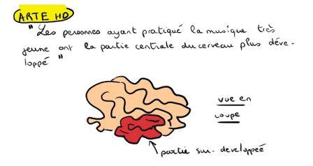 cervelle01.jpg