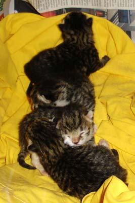 En dag gammal, sovandes ihop med sina syskon.