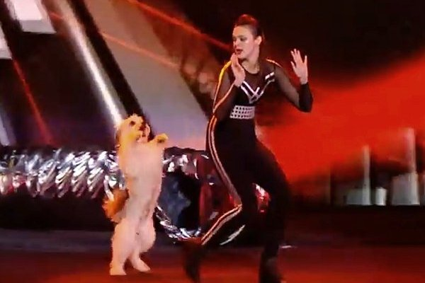 Britain's Got Talent Final - Pudsey dog dancing