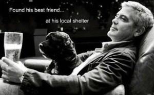 """""""Encontró a su mejor amigo...en el refugio para animales cercano a su casa"""" johnsibley.com"""