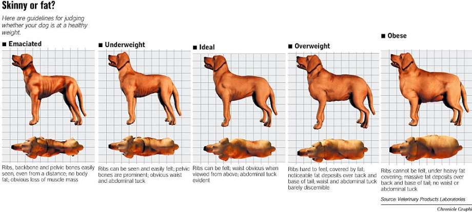 Dog Weight Guide