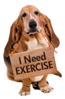 Dog I Need Exercise Sign