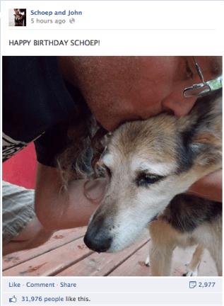 senior dog birthday celebration