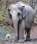 www.elephants.com