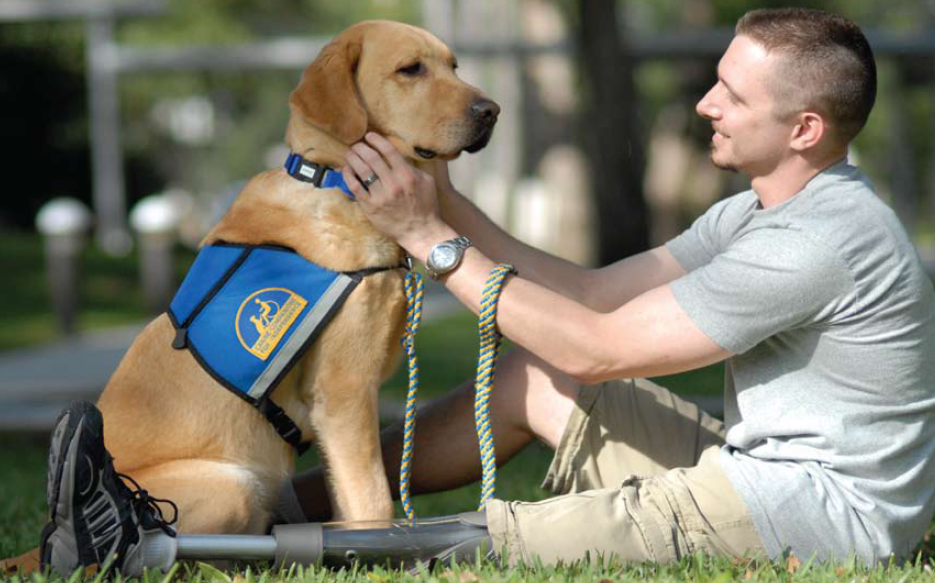 Service Dog for People with Disabilities