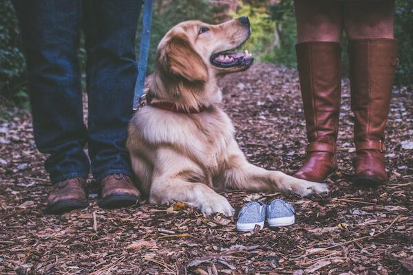 Dog Family Maternity Photos