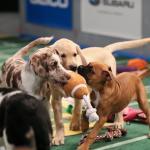 ¿Has oído hablar del Puppy Bowl?