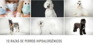 10 razas hipoalergenicas HEADER