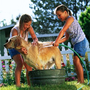 austin_pet_flea_treatment_300x300