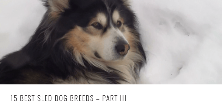 best-sled-breeds-3-header.png