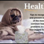 Health. Tips to recognize and prevent some of the most common health problems in our four-legged family members.