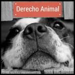 Derecho Animal