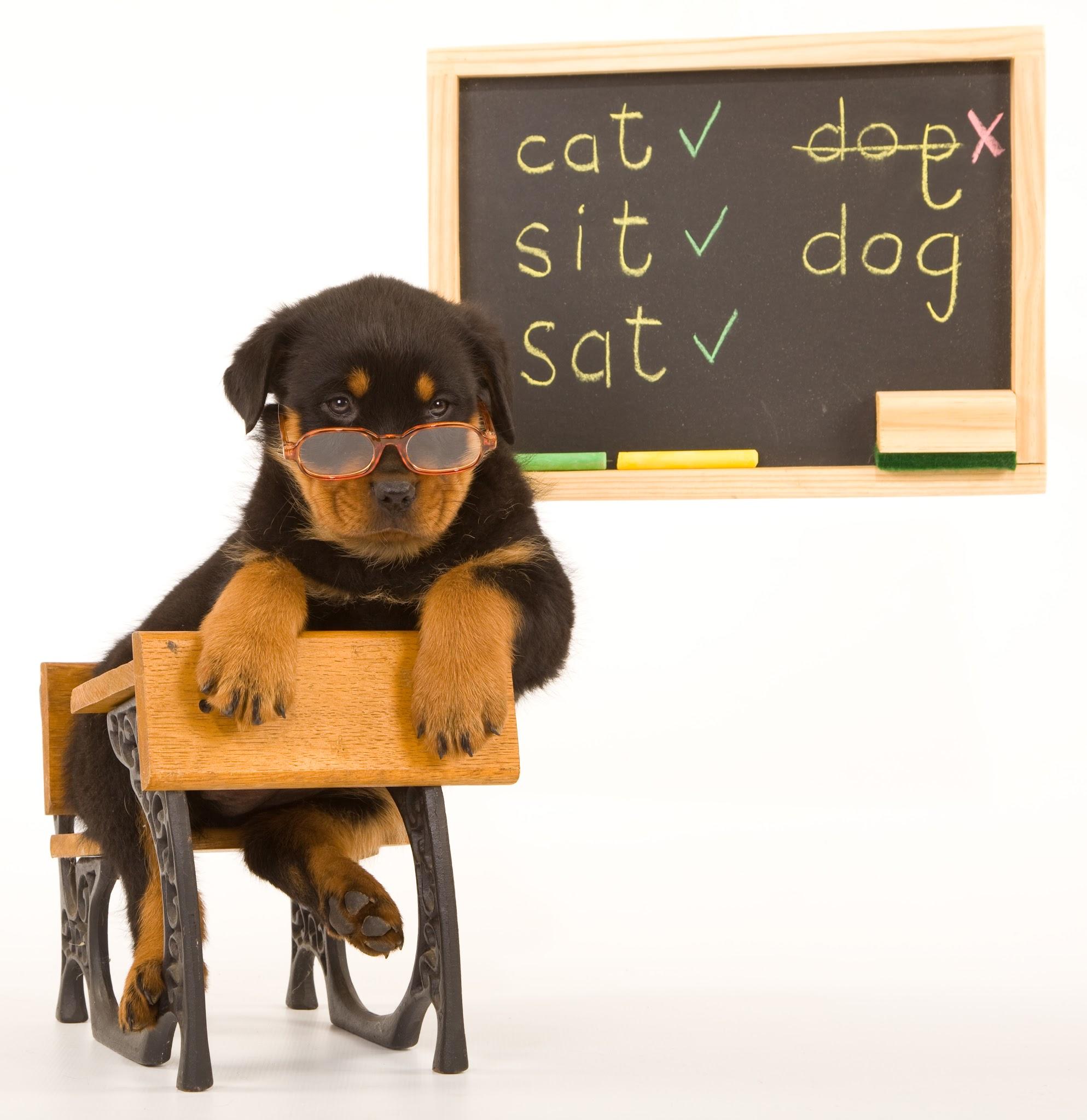 dog-in-school