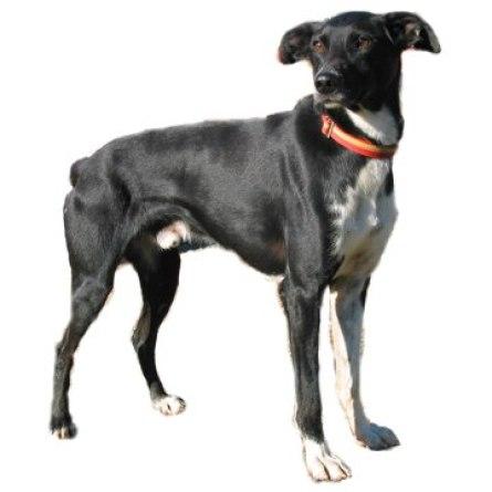 Eurohound