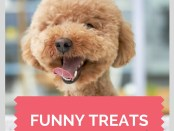 Funny Treats, A little taste of humor -Cosmodoggyland