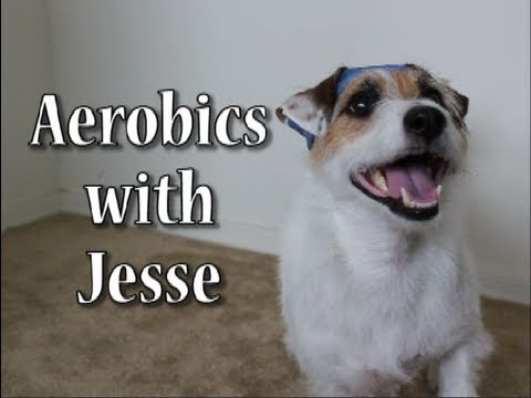 jesse_the_jack_russell_does_aerobics-1(1)