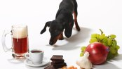 toxic food for dogs- Cosmodoggyland