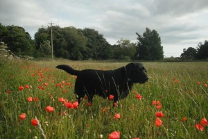 Pawprints In Time: Remembrance Day