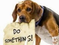 sad-do-something-dog