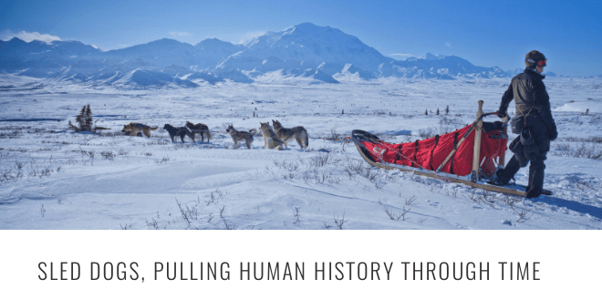 sled-dog-pulling-history-header.png