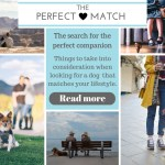 The perfect match. The search for the perfect companion. Things to take into consideration when looking for a dog that matches your lifestyle. Read more