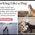 Working like a dog. A space to learn and share information about working dogs, their traits and the best dog breeds for each kind of job as well as stories of love, bravery, and service.
