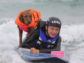 Dog Surfing with Quadriplegic Boy