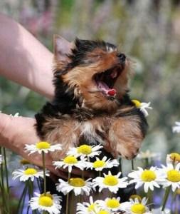 alergic dog