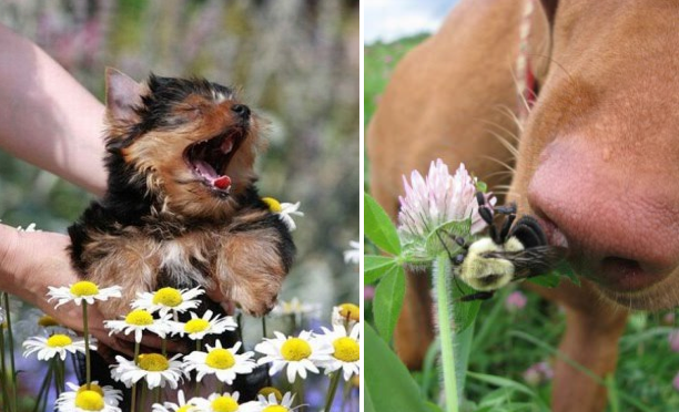 dog allergies featured image