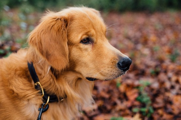 13 Dog Breeds With Sensitive Skin - Preventing Atopic Dermatitis