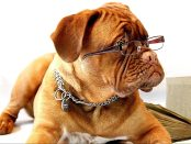 Dog with glasses and book