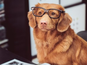 Dog with glasses cosmodoggyland chill professor