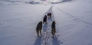 Dog Sled Tours Cosmodoggyland