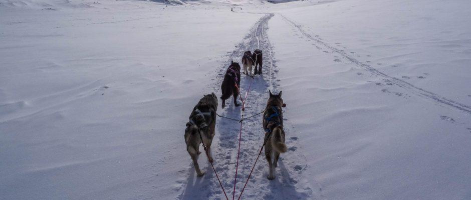 Dog Sled Tours Cosmodoggyland