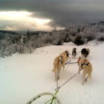 Interview With Caroline Blair-Smith & Andy Bartleet From Mornington Crescent Sled Dogs