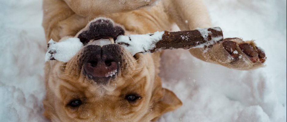 Dog playing and having fun in the snow
