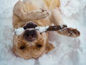 Chien qui joue et s'amuse dans la neige