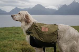 Dog with backpack on