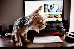 Dog online laptop