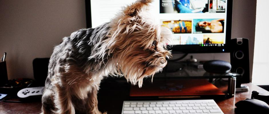 Dog online laptop