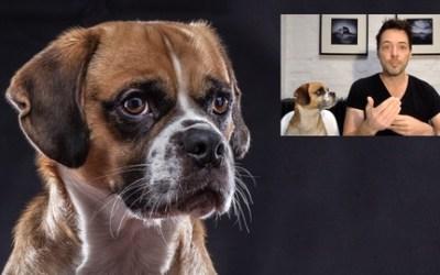Pet Photography Masterclass