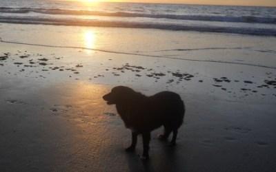 Holistic Dog - Treating K9 Pain, Stress & Ailments Naturally