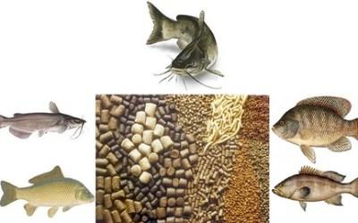 how to make Balance Fish Food