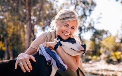 Beginners Guide to Basic Dog Foundation Training Level 1