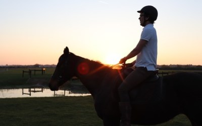 Speak the Horse Language: Master Your Horsemanship Energy