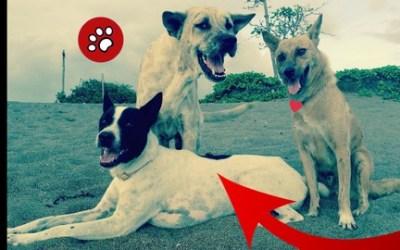 FREE DOG Stray Dog Village Dog - The Quintessential Canine