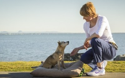 The 5 Essential Concepts for the MODERN Dog Trainer